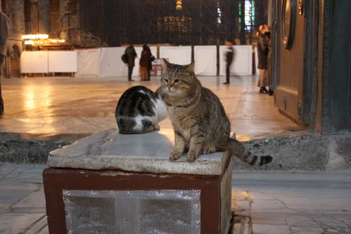 Gatekeepers of Hagia Sofia